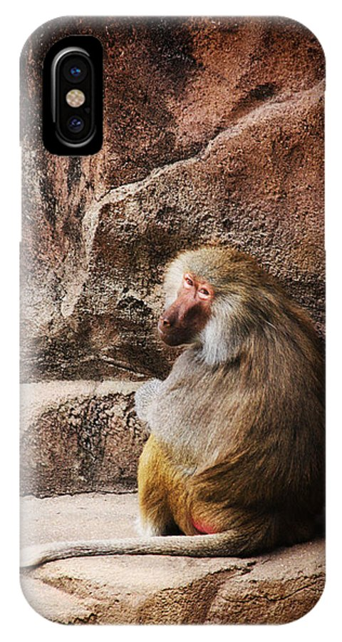 Monkey IPhone X / XS Case featuring the photograph Monkey Business by Karol Livote