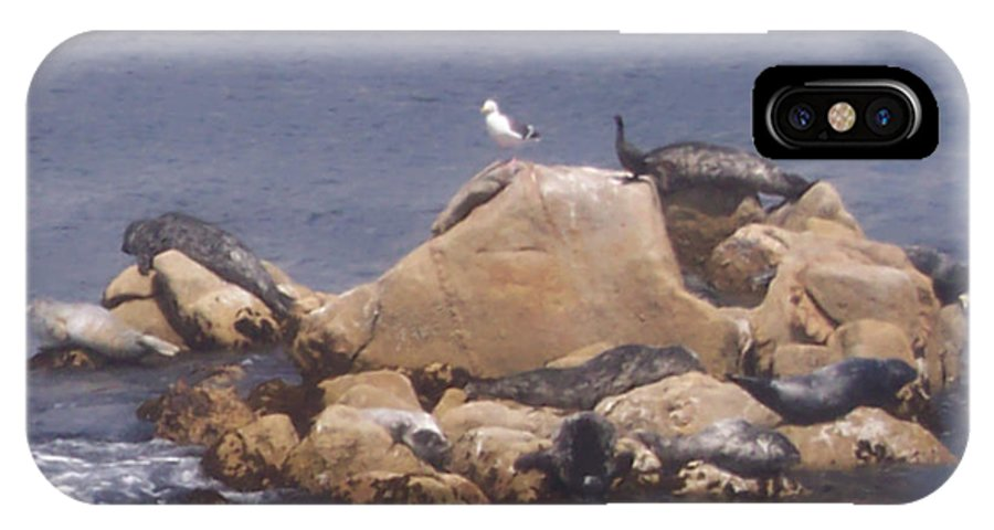 Seal IPhone X Case featuring the photograph Monterey Sun Bath by Pharris Art