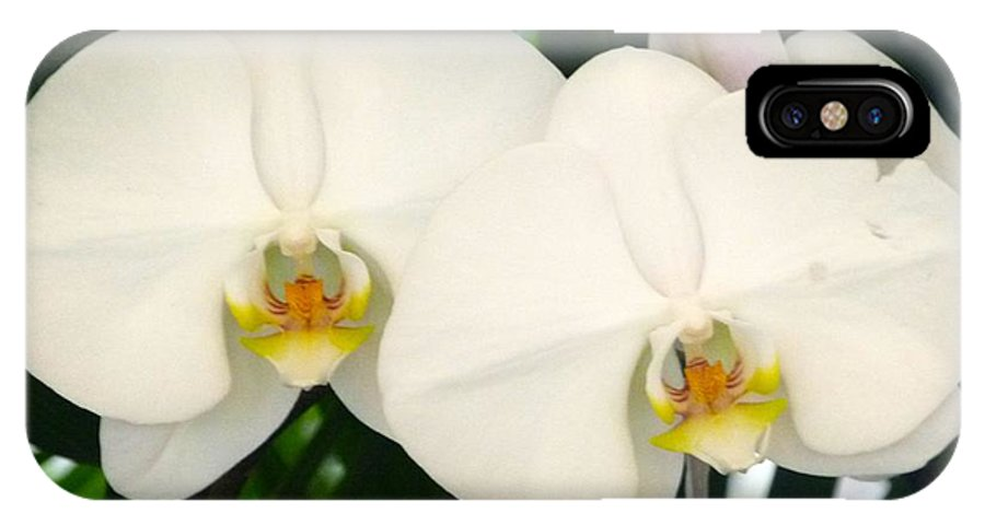 Moon Orchid IPhone X Case featuring the photograph Moon Orchid Pair by Richard Bryce and Family