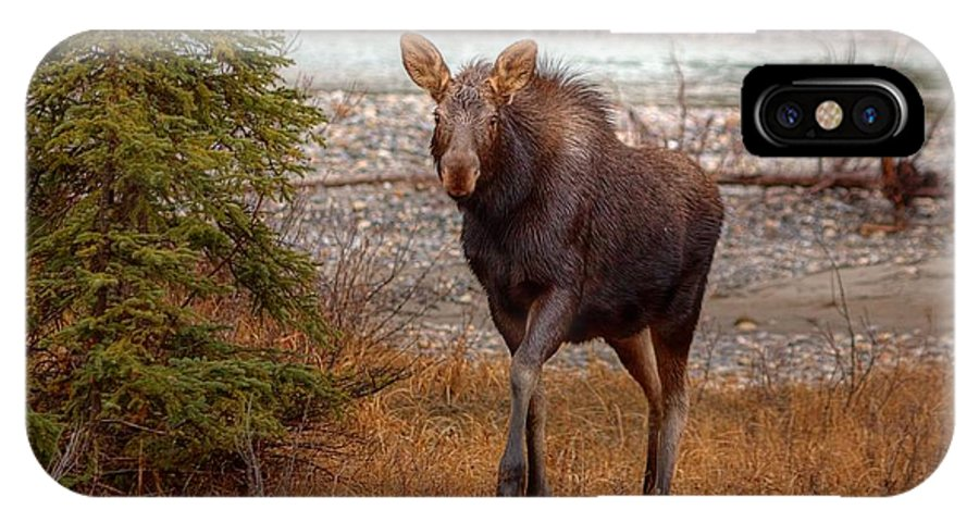 Moose IPhone X Case featuring the photograph Moose Calf by James Anderson