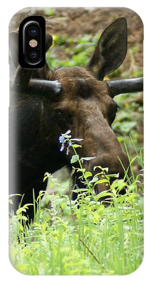 Moose IPhone X Case featuring the photograph Moose by Donald Brinkman