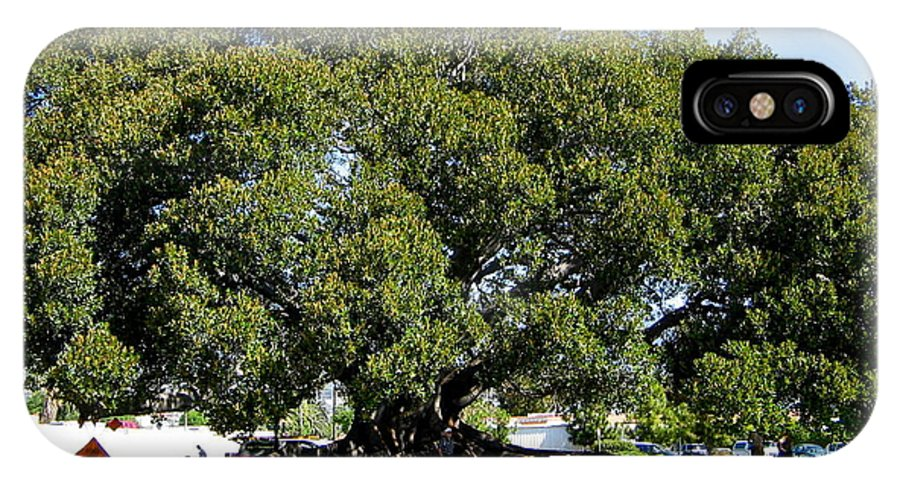 Moreton Fig Tree IPhone X Case featuring the photograph Moreton Fig Tree In Santa Barbara by Denise Mazzocco