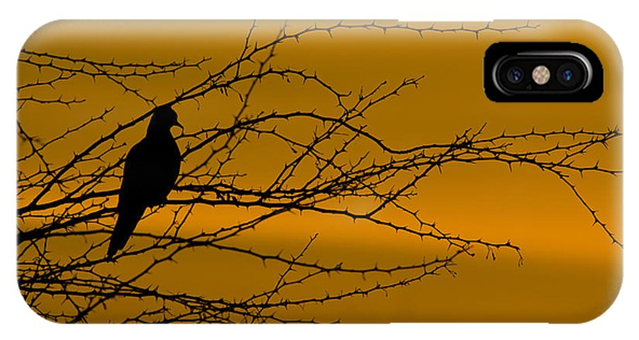 Dove IPhone X Case featuring the photograph Morning Dove by Kelly Gibson
