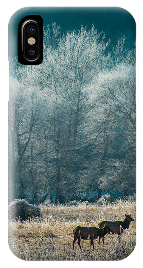 Elk IPhone X Case featuring the photograph Morning Frost by Scott Hafer