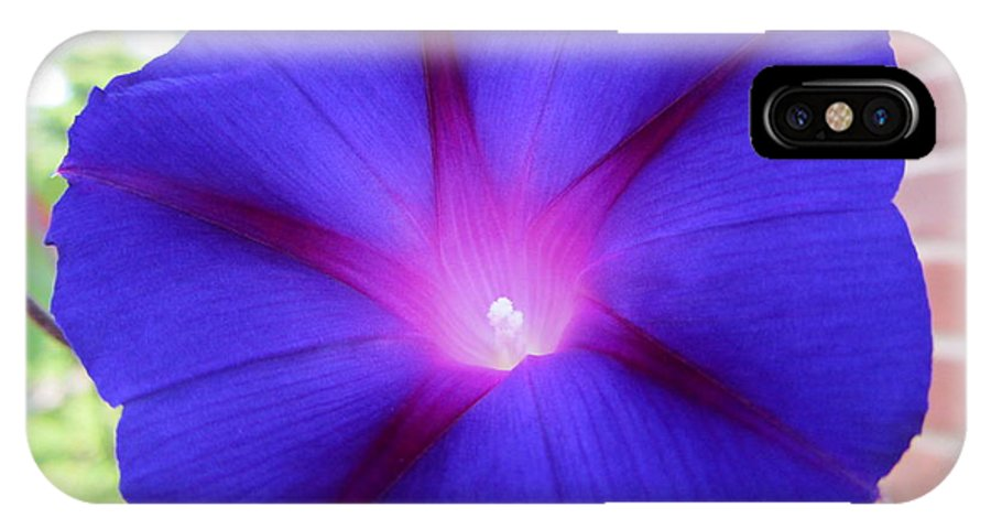 Flora IPhone X Case featuring the photograph Morning Glory Vine by Susan Carella