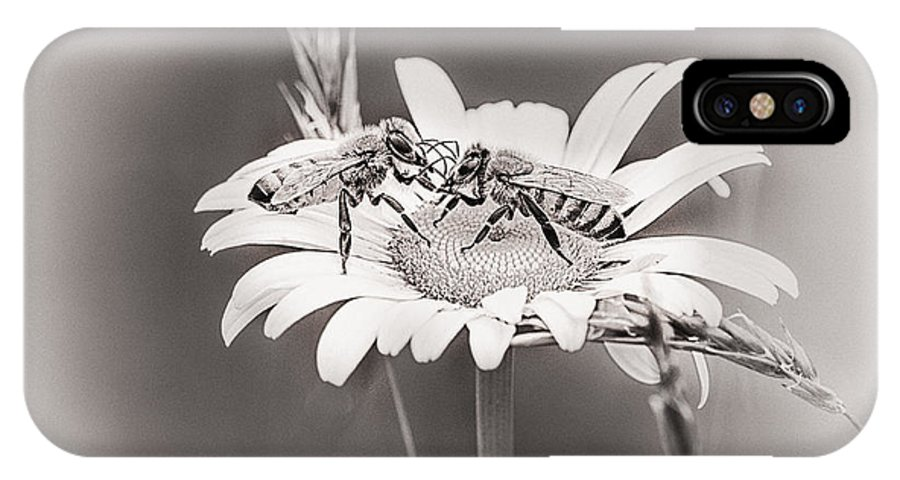 Bees IPhone X Case featuring the photograph Morning News by Susan Capuano