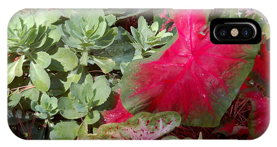 Caladium IPhone X / XS Case featuring the photograph Morning Rain by Suzanne Gaff