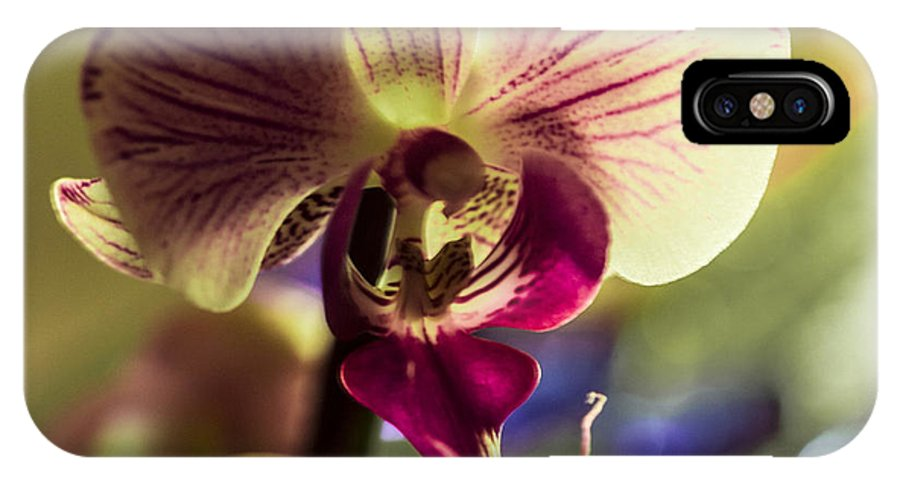 Red-yellow Orchid IPhone X Case featuring the photograph Morning Splender by Sheree Lauth