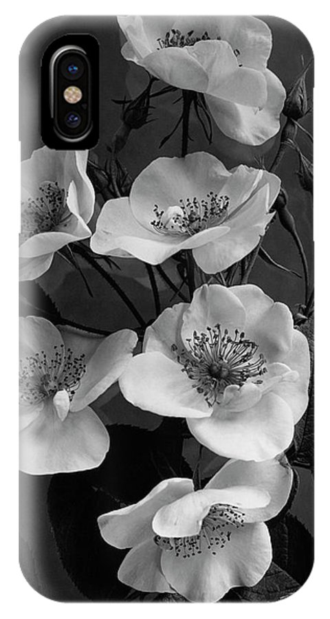 Flowers IPhone X Case featuring the photograph Moschata Alba by J. Horace McFarland