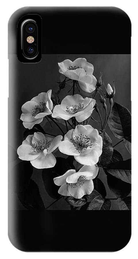 Moschata Alba IPhone X Case
