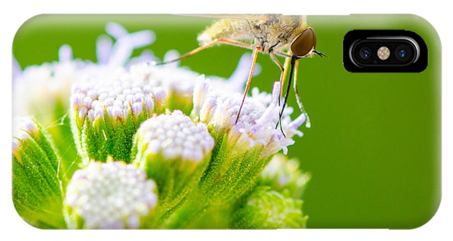 Mosquito IPhone X Case featuring the photograph Mosquito by Michael Moriarty