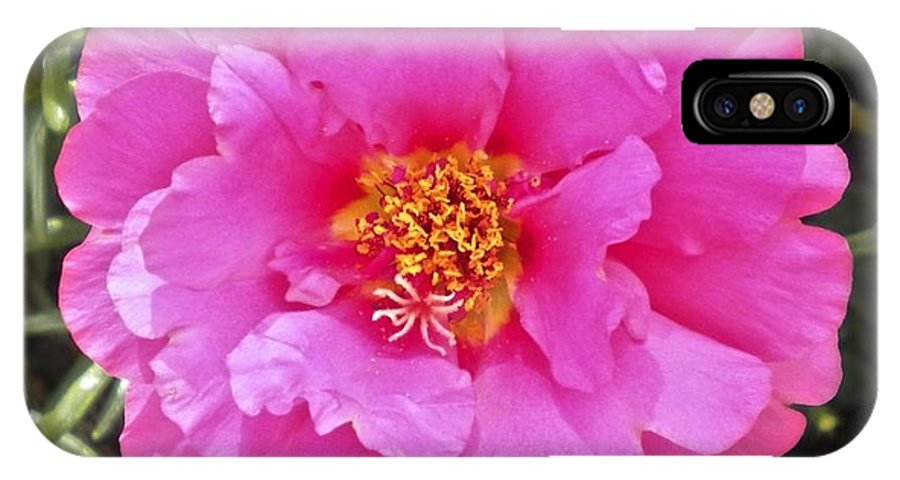 Moss IPhone X Case featuring the photograph Moss Rose by William Hallett