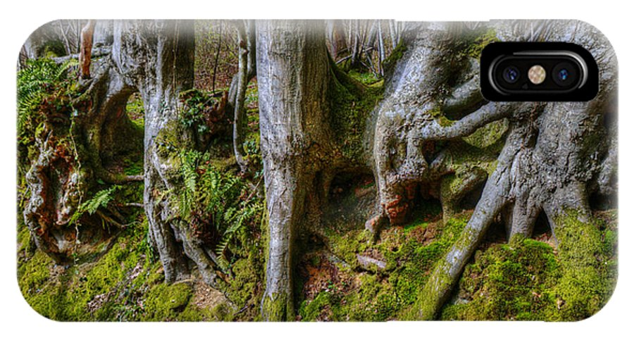 Tree IPhone X Case featuring the photograph Mossy Woodland by Mick House
