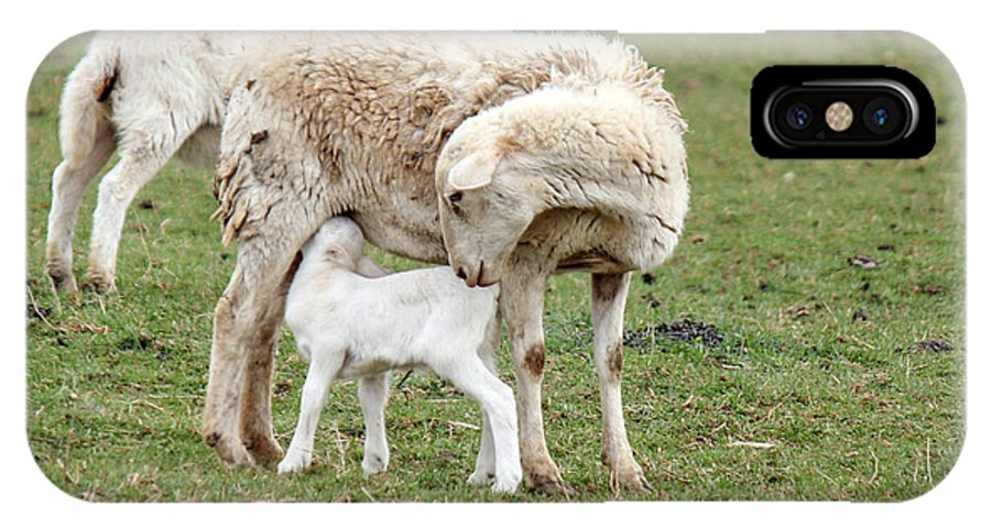 Sheep IPhone X Case featuring the photograph Mother Had A Little Lamb by Frank Selvage