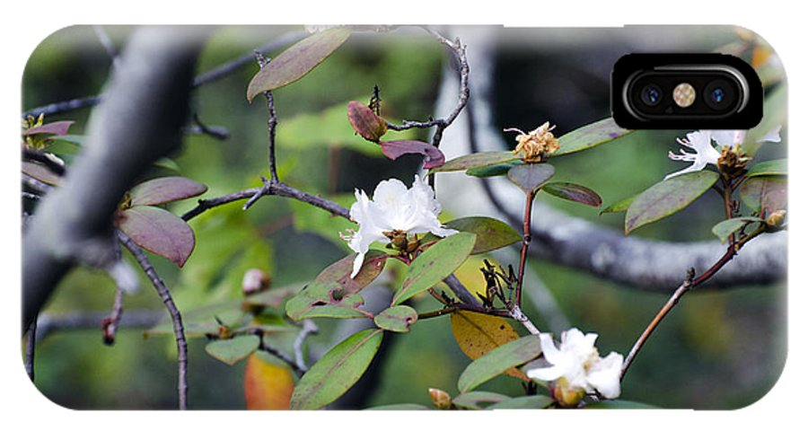 Flower IPhone X Case featuring the photograph Mountain Flowers by Sam Gustin