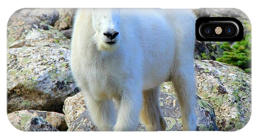 Colorado IPhone X Case featuring the photograph Mountain Goat by Danielle Marie