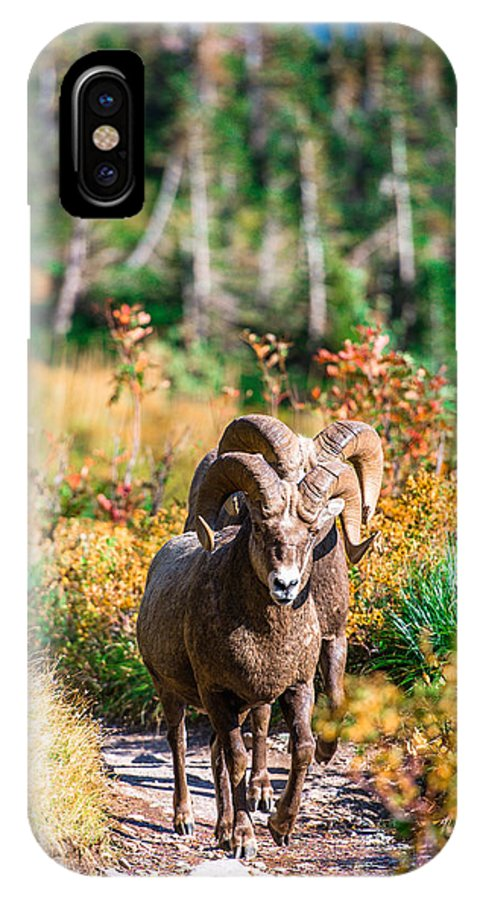 Wildlife IPhone X Case featuring the photograph Mountain Goats by Rohit Nair