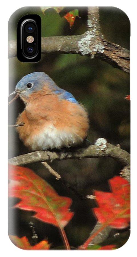 Bluebird IPhone X Case featuring the photograph Mr Bluebird by Mim White