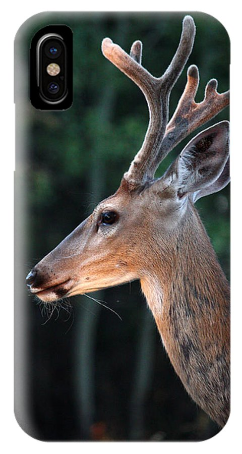 Adams IPhone X Case featuring the photograph Mr. Majestic by Rita Kay Adams