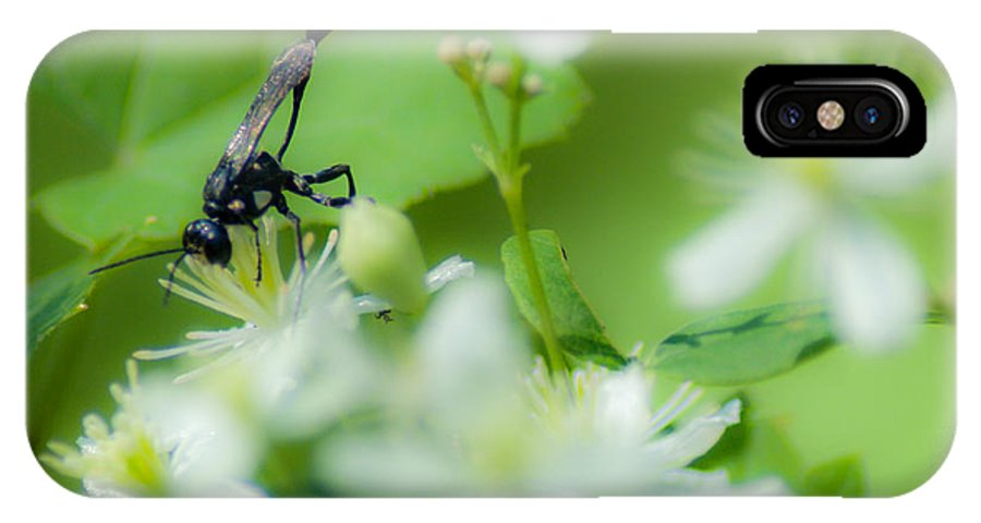 Optical Playground By Mp Ray IPhone X Case featuring the photograph Mud Dauber In The Flowers by Optical Playground By MP Ray