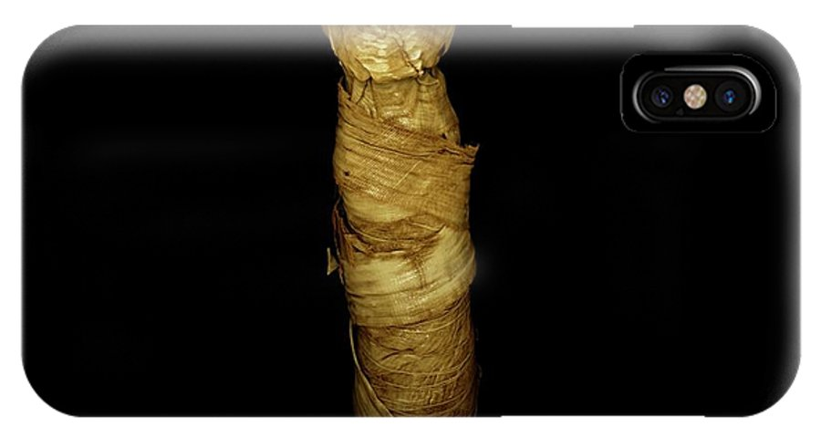 Animal IPhone X Case featuring the photograph Mummified Cat by Dan Sykes/natural History Museum, London