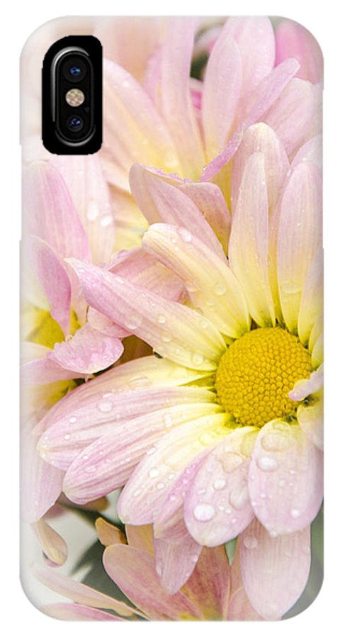 Mums IPhone X Case featuring the photograph Mums 5 by Susan McMenamin