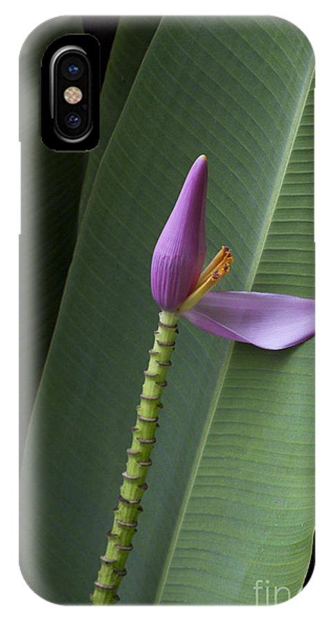 Aloha IPhone X Case featuring the photograph Musa Ornata - Pink Ornamental Banana Flower - Kepaniwai Maui Hawaii by Sharon Mau