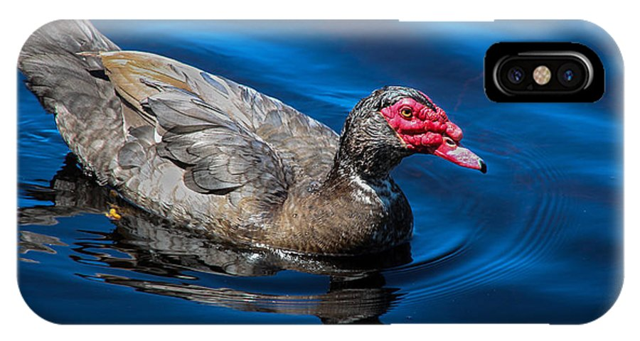 Muscovy Duck IPhone X Case featuring the photograph Muscovy Duck by Christine Nunes