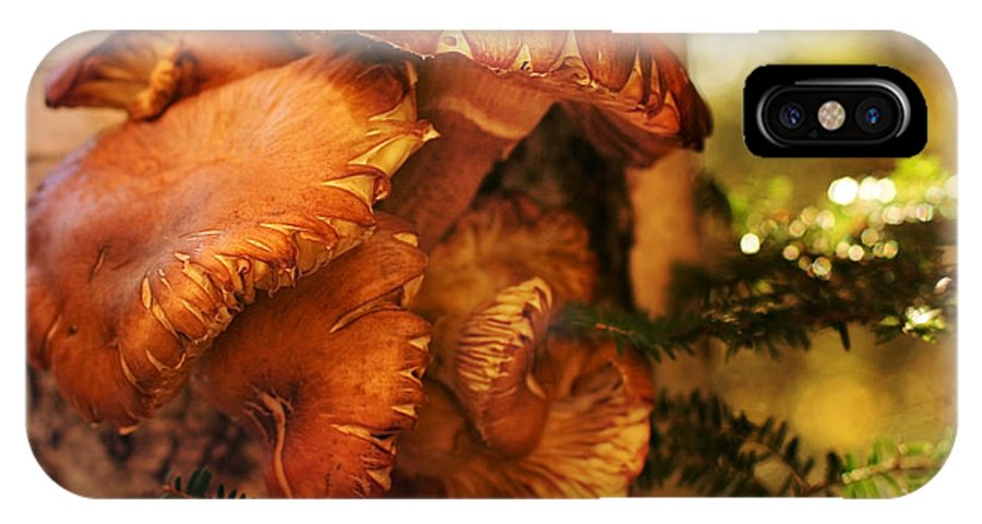 Mushrooms IPhone X Case featuring the photograph Mushrooms Untitled 2754 by Damon Clarke