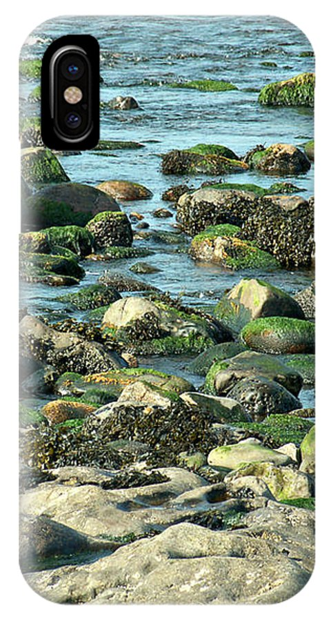 Atlantic IPhone X Case featuring the photograph Mussels And Moss by Lisa Blake