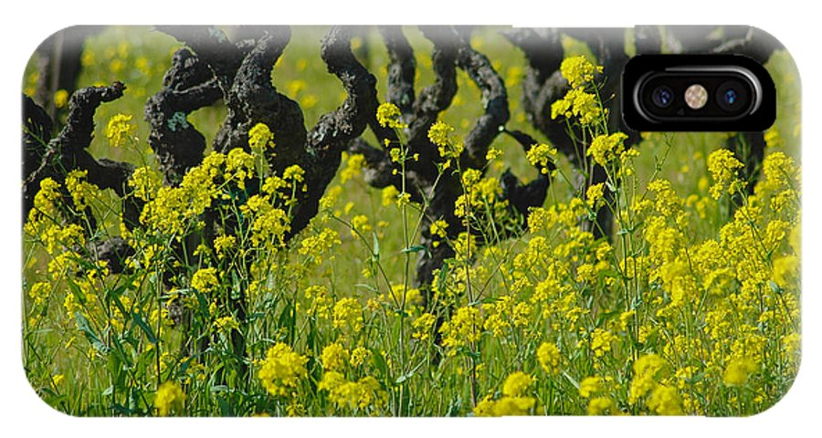 Napa IPhone X / XS Case featuring the photograph Mustard And Old Vines by Debbie Ames