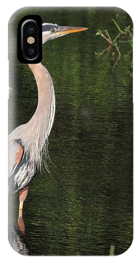 Great Blue Heron IPhone X Case featuring the photograph My Best Side by Cindy Reilley