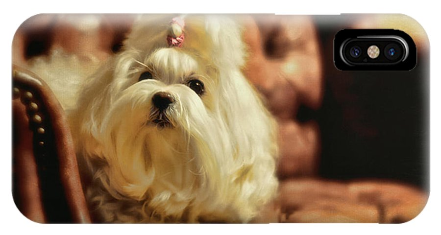 Dog IPhone X Case featuring the photograph My Chair by Lois Bryan