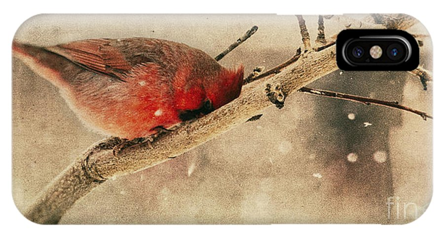 Cardinal IPhone X Case featuring the photograph My Nose Is Cold by Pam Holdsworth