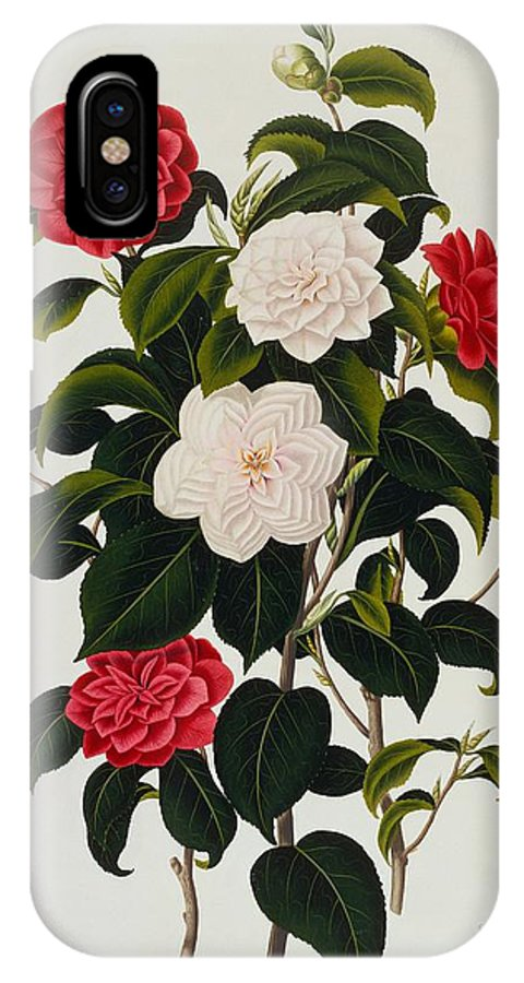 Flower IPhone X Case featuring the painting Myrtle Leaved Camellia by Clara Maria Pope