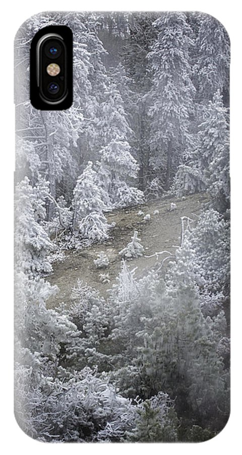 Trees IPhone X Case featuring the photograph Mystical by Carolyn Fox
