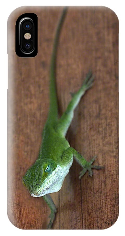 Lizard Photography IPhone X Case featuring the photograph Nap Time by Patricia Griffin Brett