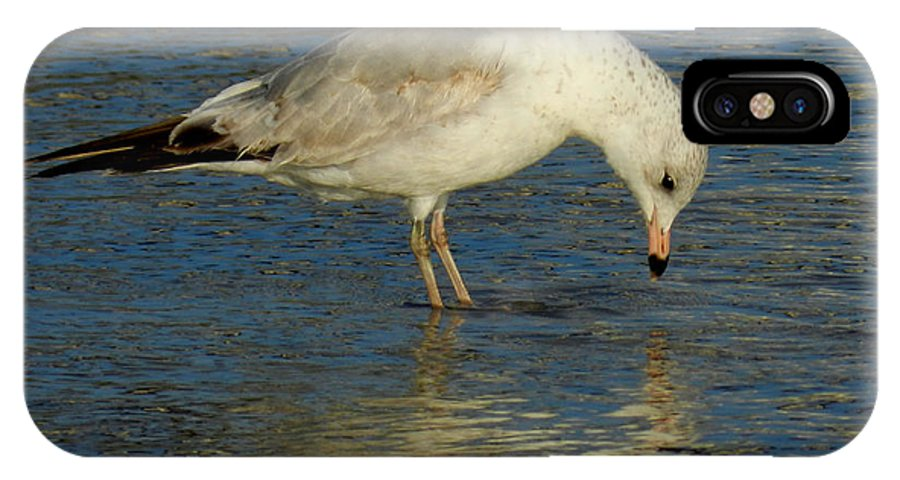 Gull IPhone X Case featuring the photograph Narcissus by Grace Dillon