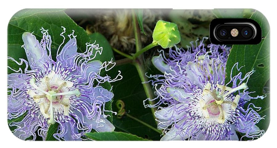 IPhone X Case featuring the photograph Nature Showing Off by Shirley Moravec