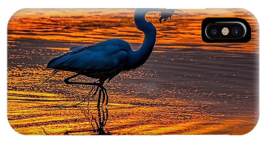 Egret IPhone X / XS Case featuring the photograph Natures Fisherman by Nick Zelinsky