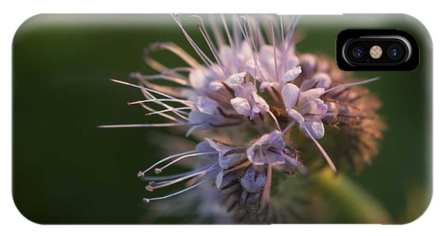 Flowers IPhone X Case featuring the photograph Natures Treasures by Miguel Winterpacht