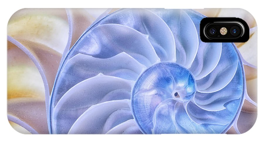 Shell IPhone X Case featuring the photograph Nautilus Shell by Kate Silvia