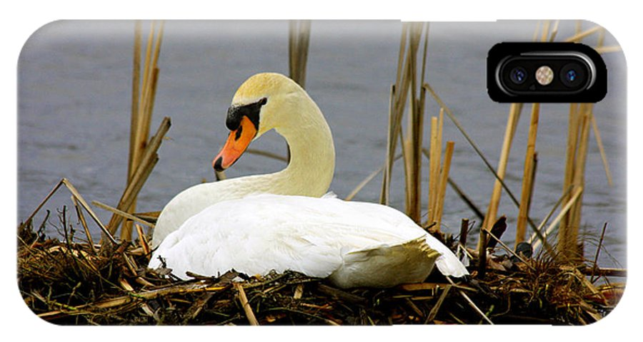 Swans Art Prints IPhone X Case featuring the photograph Nesting Swan by Marie Jamieson