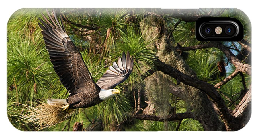 Bald Eagles IPhone X Case featuring the photograph Nestoration by Mike Rivera