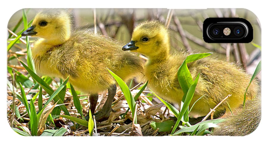 Goose IPhone X Case featuring the photograph New Beginnings by Betsy Knapp