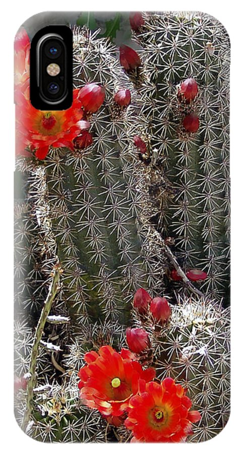 Cactus IPhone X Case featuring the photograph New Mexico Cactus by Kurt Van Wagner