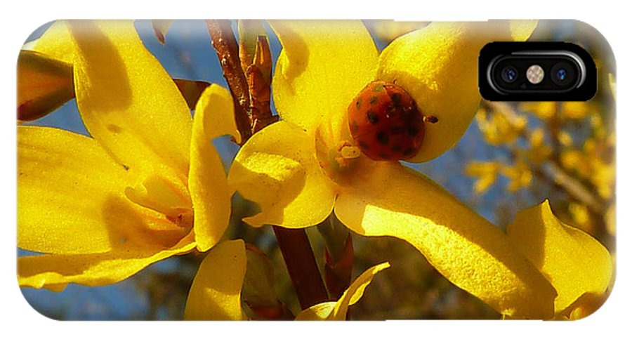 Forsythia IPhone X / XS Case featuring the photograph New Season - Old Friend ... Forsythia In Springtime by Connie Handscomb