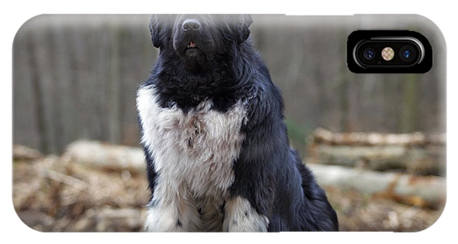 Newfoundland IPhone X / XS Case featuring the photograph Newfoundland Dog by Jean-Michel Labat