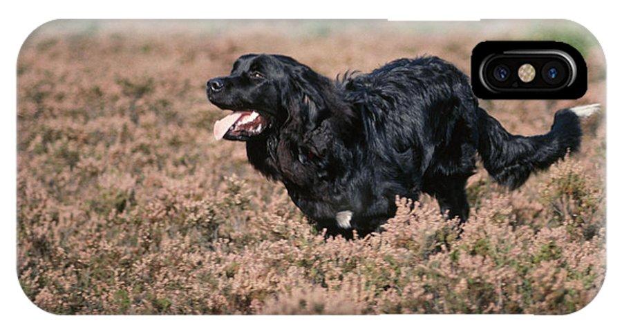 Newfoundland IPhone X / XS Case featuring the photograph Newfoundland Running by John Daniels
