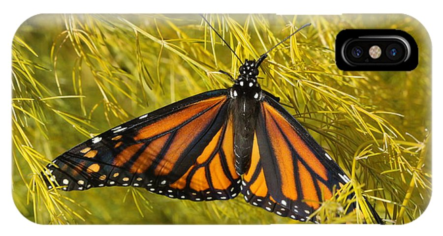 Monarch IPhone X / XS Case featuring the photograph Newly Hatched by Kristy Jeppson
